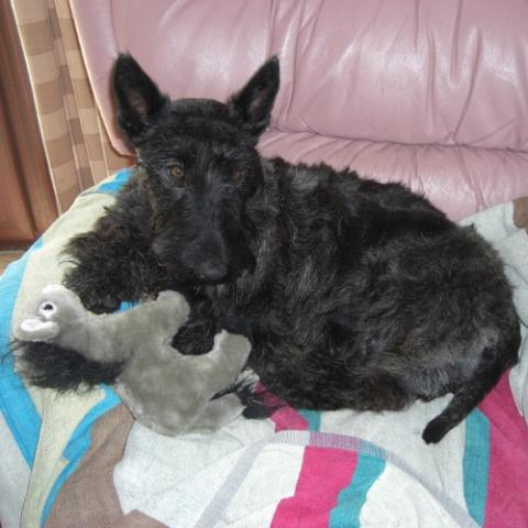 Meg with her comfort donkey