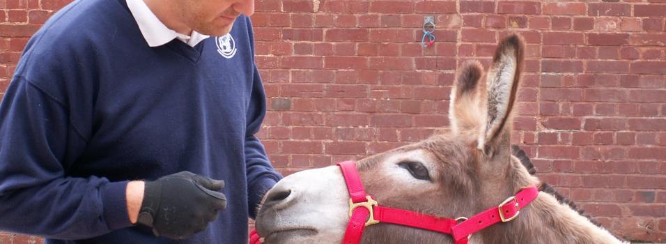 Understanding your donkey